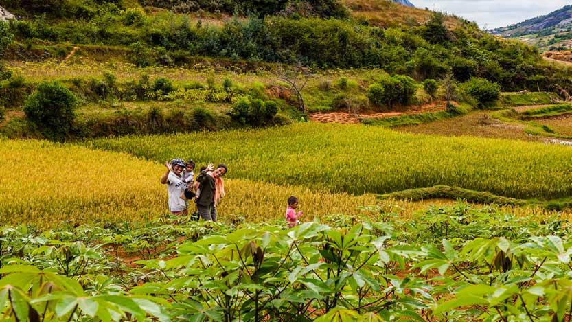 People waving in a field