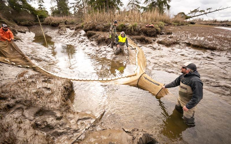 Researchers conduct near-shore sampling of fish populations in a Washington estuary.