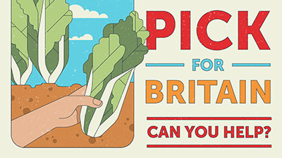 pick for the people campaign graphic lettuce version