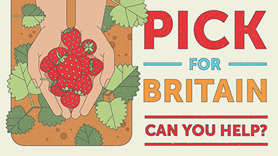pick for the people campaign graphic strawberry version
